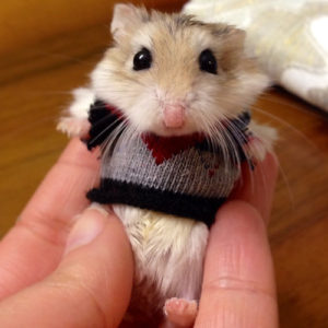 Somehow I don't think my mental hamsters are quite this stylish or adorable.